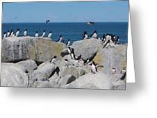 Auk Island Greeting Card