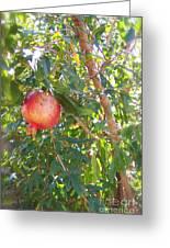 Aunt Tissy's Pomegranate Tree  Greeting Card