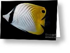Auriga Butterfly Fish Greeting Card