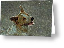 Australian Cattle Dog Mix Greeting Card