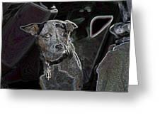 Australian Cattle Dog Sheltie Mix Greeting Card