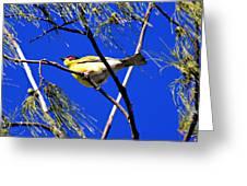 Australian Figbird Greeting Card