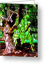 Autograph Tree Greeting Card