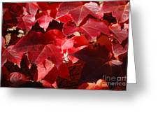 Autumn 11 Greeting Card by Elena Mussi