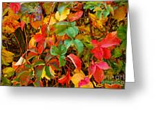 Autumn 3 Greeting Card by Elena Mussi