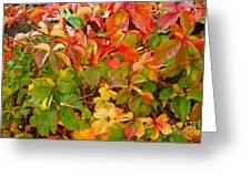Autumn 4 Greeting Card by Elena Mussi