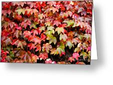 Autumn 5 Greeting Card by Elena Mussi