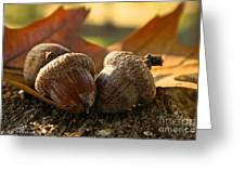 Autumn Acorns Greeting Card
