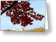 Autumn Afternoon In Peterborough Greeting Card