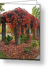 Autumn Arbor In Grants Pass Park Greeting Card