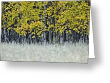 Autumn Aspen Grove Near Glacier National Park Greeting Card