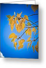 Autumn Aspen Leaves And Blue Sky Greeting Card