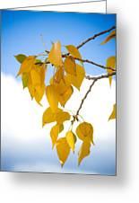 Autumn Aspen Leaves Greeting Card