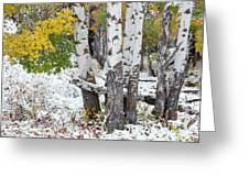 Autumn Aspens And Snow Greeting Card