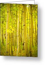 Autumn Aspens Vertical Image  Greeting Card