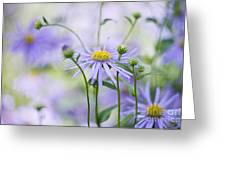 Autumn Asters Greeting Card by Jacky Parker