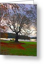 Autumn At British Camp Greeting Card