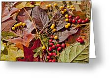 Autumn Berries And Leaves Background  Greeting Card
