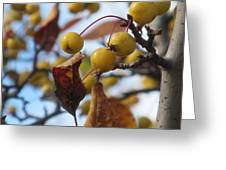 Autumn Berry Branch Greeting Card