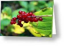 Autumn Berry Greeting Card