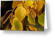 Autumn Birch In Southern Oregon Greeting Card