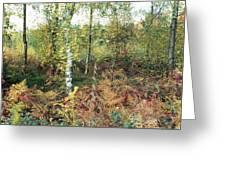 Autumn Birchh Forest Greeting Card