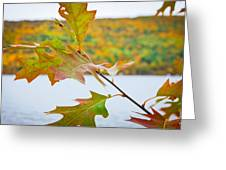 Autumn Bliss Greeting Card