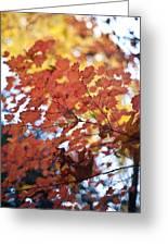 Autumn Brilliance Greeting Card