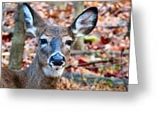 Autumn Buck Greeting Card