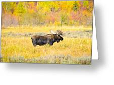 Autumn Bull Limited Edition Greeting Card
