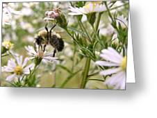 Autumn Bumblebee And Flowers Greeting Card