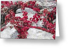Autumn Color Is Red Greeting Card