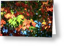 Autumn Color Medley Greeting Card
