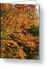 Autumn Colors In Pa Greeting Card