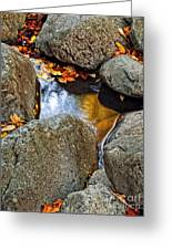 Autumn Colors Reflected In Pool Of Water Greeting Card