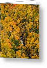 Autumn Colour And Waterfalls, Cape Greeting Card by John Sylvester