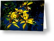 Autumn Comes To The Courthouse Greeting Card