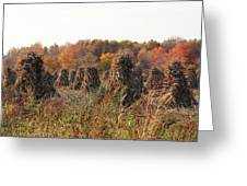 Autumn Corn Greeting Card