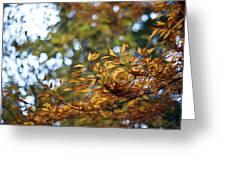 Autumn Crescendo Greeting Card