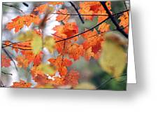 Autumn Day Dream Greeting Card