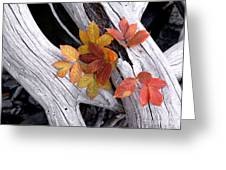 Autumn Driftwood 2 Greeting Card