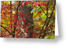 Autumn Excellence 6181 Greeting Card