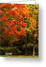 Autumn Fall Tree In Purchase New York Greeting Card