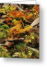 Autumn Ferns On Pickle Creek At Hawn State Park Greeting Card