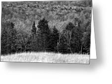 Autumn Field Bw Greeting Card