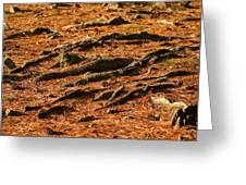 Autumn Forest Floor Greeting Card