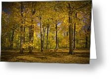 Autumn Forest Scene In West Michigan No.1140 Greeting Card
