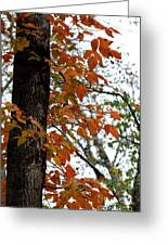 Autumn Glory At Tannehill Greeting Card