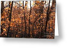 Autumn Glory Greeting Card by Chris Hill