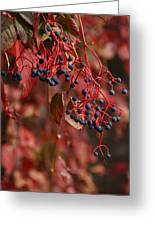 Autumn Grapes Greeting Card